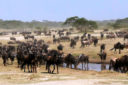 Aventure en Tanzanie