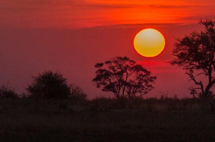 Aventures au Botswana