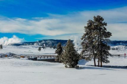 Féerie hivernale à Yellowstone